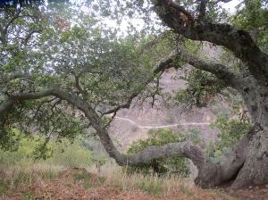 South Rim Trail, Alum Rock Park, San Jose, CA. By Lupa, 2014.